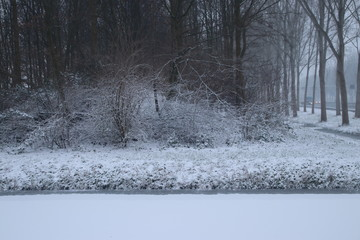 Snow on and between trees on small forest strip along motorway A20 in the Netherlands.
