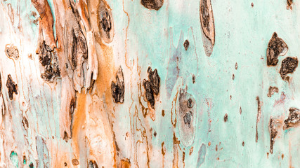 Bark of tree. Background. Wallpaper texture.Close up.