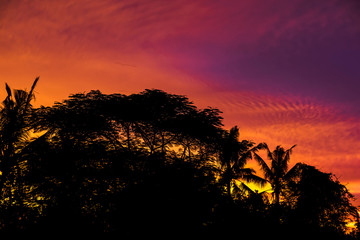 Rain forest tree silhouette with golden hour sky sunset high resolution image
