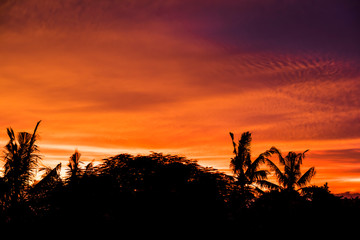 Rain forest tree silhouette with golden hours sky sunset high resolution image