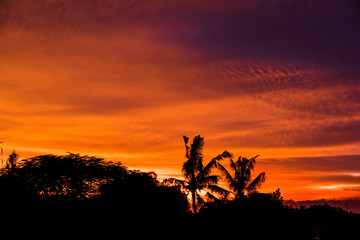 Palm tree silhouette with golden hours sky sunset high resolution image