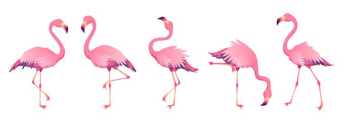 Pink flamingos. Cute flamingo animal exotic nature wild fauna zoo bird beak plumage legs tropical african beach art