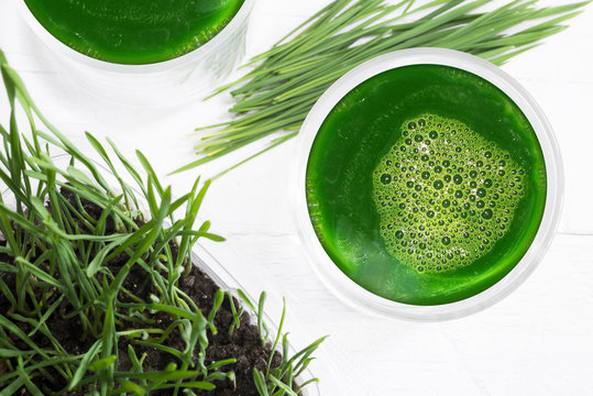 Healthy ingredients for detox, wheatgrass juice with young shoots of the wheat plant isolated on white background with copy space