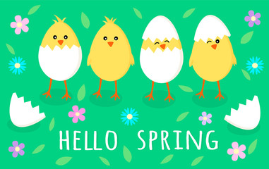 Spring greeting card with four cute little yellow chicks in cracked eggs, egg shell, flowers and leaves with sign Hello spring, vector eps10 graphic. Cartoon flat illustration isolated on green grass