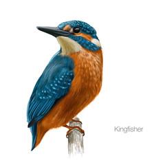 kingfisher hand drawn vector illustration