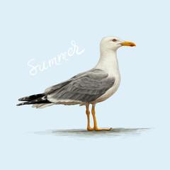 seagull hand drawn vector illustration