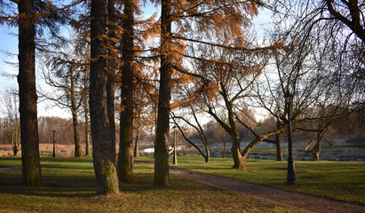 Trees in the Park in late autumn.