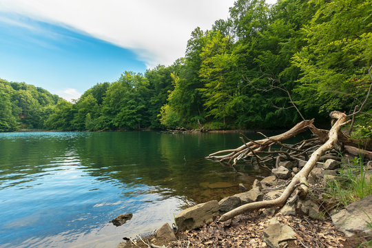 lake among primeval beech forest. morske oko located in vihorlat mountains. beautiful nature of slovakia. summer adventure concept