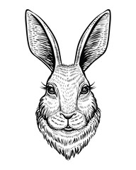 Head of rabbit or hare hand drawn vector sketch. Line illustration isolated on white background.