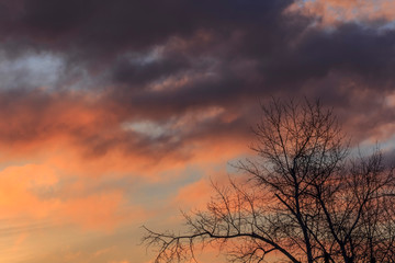 Beautiful sunset sky with colorful clouds and tree silhouettes