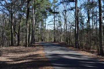 Park road in Hugh White State Park, Mississippi