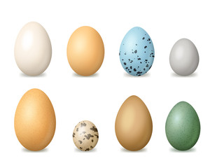 Realistic Detailed 3d Colorful Bird Eggs Set. Vector