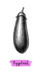 Ink sketch of eggplant isolated.