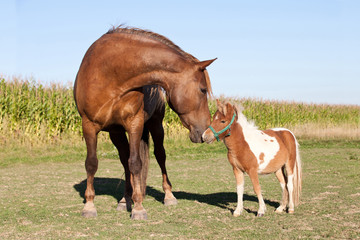 Portrait of nice big and small horses