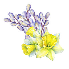 Happy easter - bouquet with a yellow narcissus flowers and fluffy catkins. Hand drawn watercolor painting illustration isolated on white background.