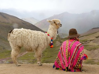 Lama in Peruvian Andes
