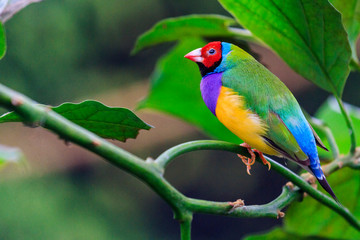 bright bird sits among green leaves