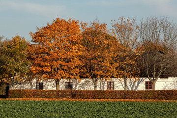 Autumn Trees by a House