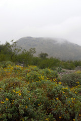 Tumamoc Hill in Tucson, Arizona, as seen from A Mountain Sentinel Peak on a rare rainy day with low clouds