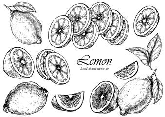 Vector set of lemon fruits. Hand drawn illustration. Isolated elements for design.