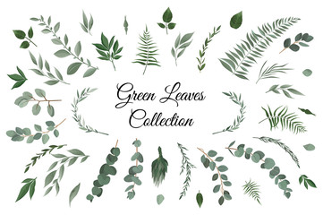 Fototapeta Vector designer elements set collection of greeng leaves herbs in watercolor style. obraz