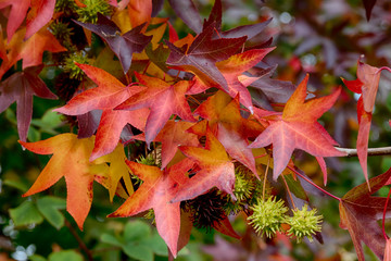 Bright vivid colorful autumn fall leaves
