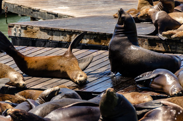 sea lions resting on pier