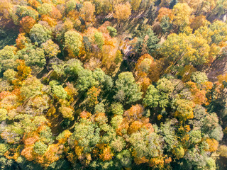 beautiful natural scene, aerial top view. bushy park trees with bright yellow and orange leaves in autumn