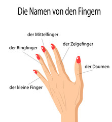 Fingers Names of Human Body Parts in german language , vector cartoon illustration