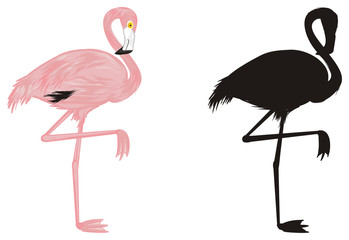 flamingo, pink flamingo, pink bird, bird, feathered, pink, animal, zoo, paradise, summer, two