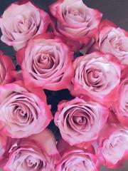 beautiful rose close-up petals Valentine background