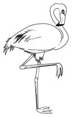 flamingo, bird, feathered, coloring, animal, zoo, paradise, summer,