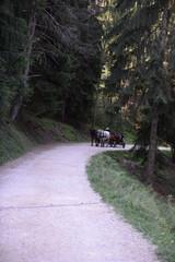 Una carrozza sul sentiero