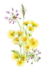 Bouquet of yellow wild flowers on a white background . For greetings and invitations