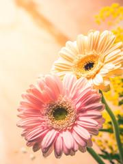 Bunch of beautiful flowers gerbera closeup