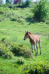 The little foal grazes on the beautiful landscape and eats green grass.