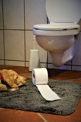 An Image of a toilet with a dog