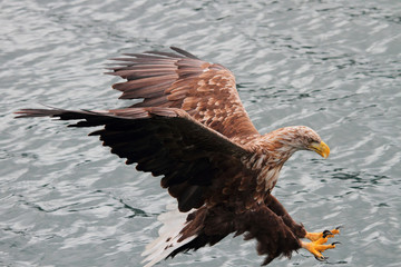 Perfect Landing on fish