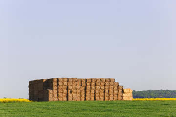 Hay bales in middle of the field