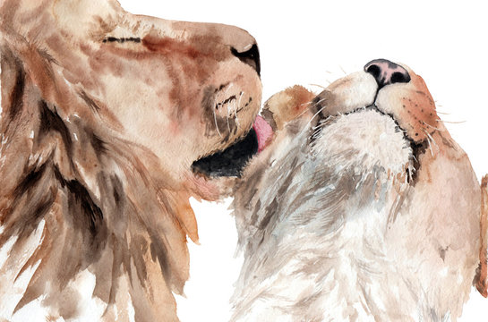 watercolor painting lions couple in love. kiss the lion
