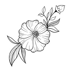 Hand drawn floral doodle background. Decorative flower for your design. Can be used for coloring page. Ideas for tattoo.