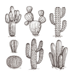Hand drawn cactus. Western desert cacti mexican plants in sketch style. Cactuses doodle vector set. Illustration of wild cactus with thorn