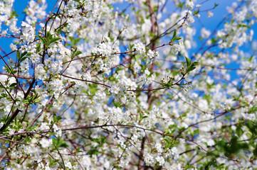Bloomimg Spring Garden