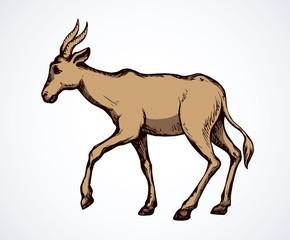Antelope. Vector illustration