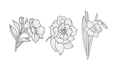 Vector set of blooming garden flowers. Botanical drawings. Beautiful natural elements. Line art
