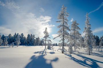 Snowy trees, winter in Norway