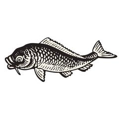 Carp fish hand drawn vector illustration