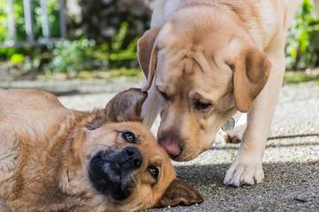 Un par de perros