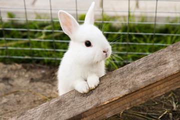 little rabbit on the farm