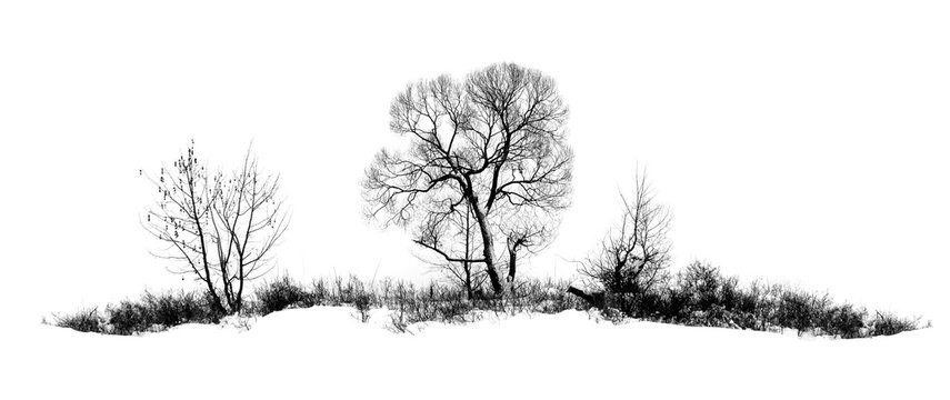 Photo of winter tree with field covered by snow isolated on white background
